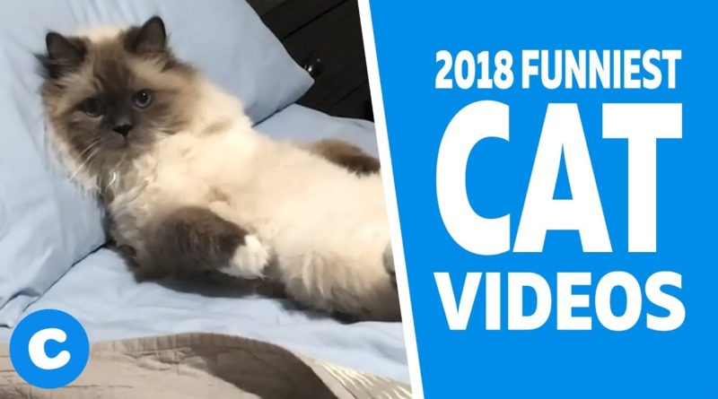 Funny Cat Videos 2018